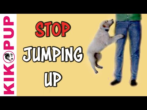 How to stop your puppy jumping up! Puppy Training