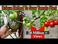 Download  Best Method To Grow Tomato Plant in Plastic Hanging Bottle ll Vertical Gardening ll No Space Garden MP3,3GP,MP4