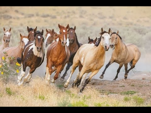A COLLECTION OF BEAUTIFUL HORSES  - By HAPPY TWIRL