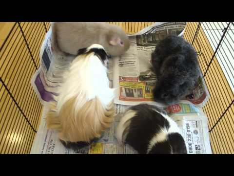 catch up with residents of Piggy Topia!