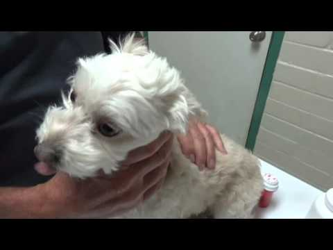 Diarrhea in a Dog: From Home to the Vet Hospital and Back