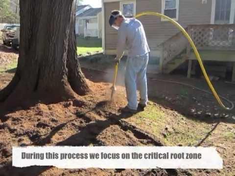 Aerating & De-Compacting Soil Around an Oak Tree