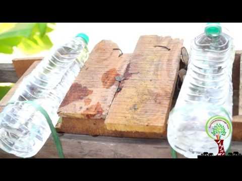 Help birds drink water in hot summer