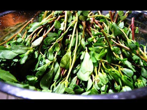 How to grow Purslane or Gangavalli and benefits