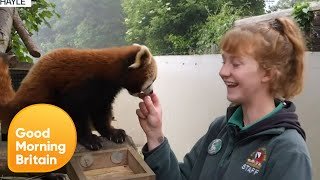 What Happens in a Zoo on Lockdown? | Good Morning Britain