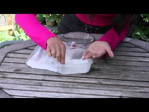 Germinating Lettuce in Paper Towels : The Chef's Garden