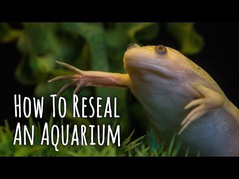 DIY - How To Reseal An Aquarium