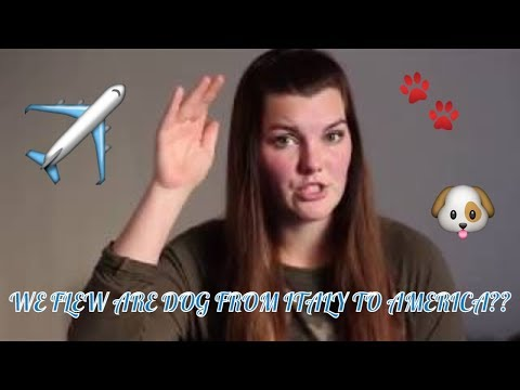 PCSING WITH YOUR DOG OVERSEAS | FLYING WITH YOUR DOG | Living With J&M (2018)