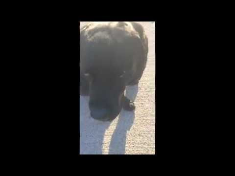 MISSING DOG NAMED CHIP