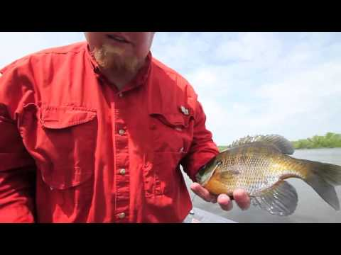 Spring Bluegill Fishing