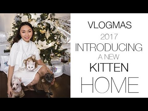 VLOGMAS 2   2nd Day of Kitten Adjusting