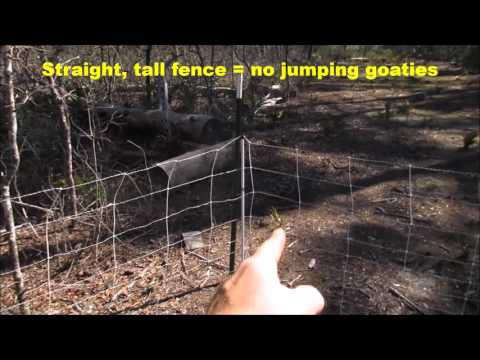 Goat Farming: Electric Fence Setup for Rotational Grazing Meat Goats at Must Bee Kiddin' Farm