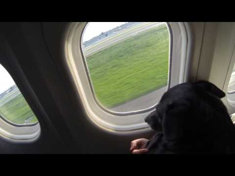 My dog Neren inside the cabin on a plane