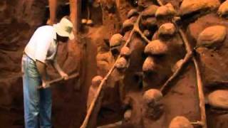 Download Giant Ant Hill Excavated Video