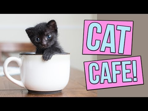 What's a Cat Cafe?