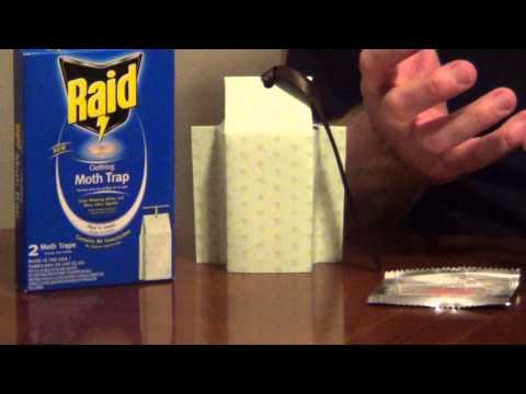 Clothes Moths - Moth Traps