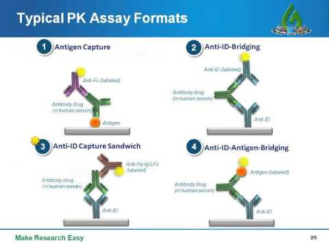 Anti Idiotypic Antibodies – A Powerful Tool for Antibody Drug Studies