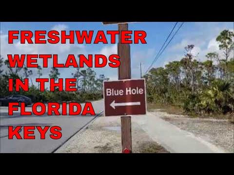 Blue Hole on Big Pine Key is part of the Florida Keys' many freshwater wetlands
