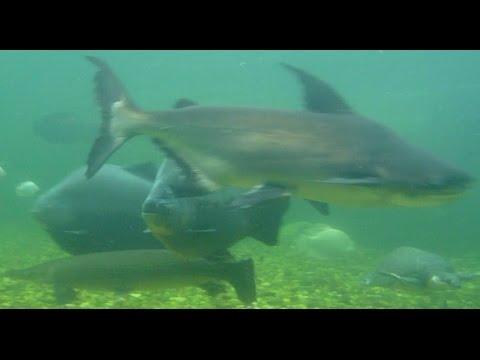 UNDERWATER footage of 60k Gallon POND! + Night Feeding