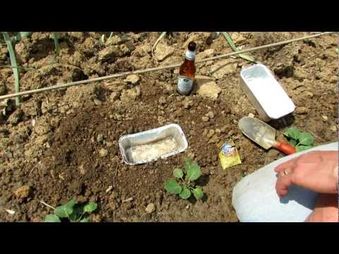 TRG 2012: How to Make the Ultimate Vegetable Garden Beer and Yeast Slug/Snail Trap