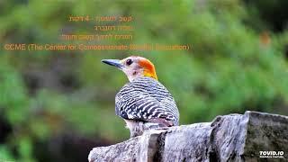 #x202b;קשב לנשימה - 4 דקות#x202c;lrm;