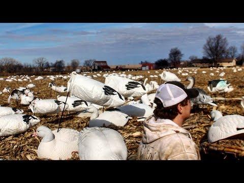 Snow Goose Hunting : Illinois Migration 2018