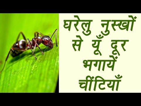 Get rid of Ants with home remedies, घरेलु नुस्खों से यूँ दूर भगाये चींटियाँ | Boldsky
