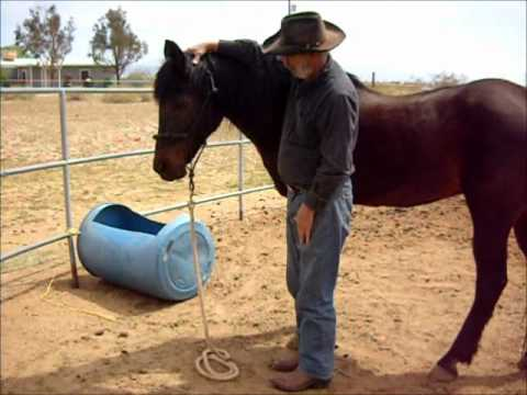 The goal of teaching your horse to lower his head and neck for haltering and bridleing