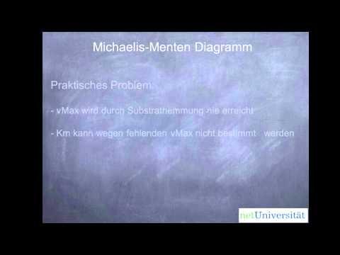 netUniversität Glossar - praktische Bestimmung der Michaelis-Menten Konstante