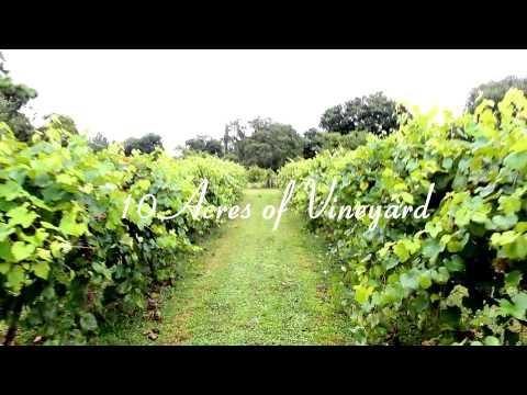 Rosa Fiorelli Winery & Vineyard