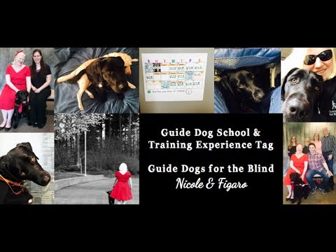 Guide Dog School and Training Experience Tag:  Guide Dogs for the Blind:  Nicole & Figaro