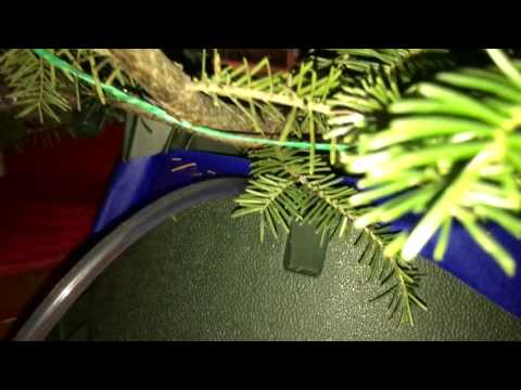 EASIEST way to water your real Christmas tree!!!