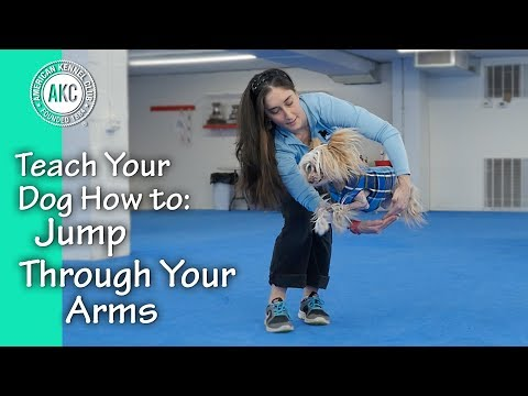 Teach Your Dog How To Jump Through Arms - AKC Trick Dog