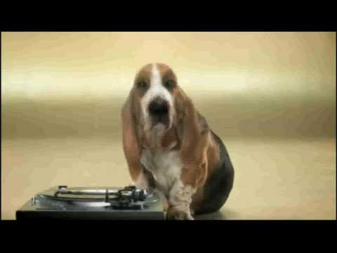 The beatboxing dog (HD)