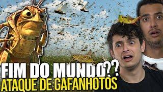 NUVEM DE GAFANHOTOS se aproxima do BRASIL?? - ENTENDA O CASO