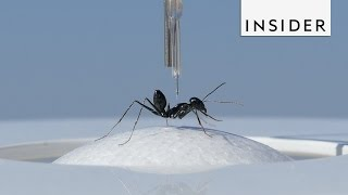 Ant Treadmill and Other Ant Science