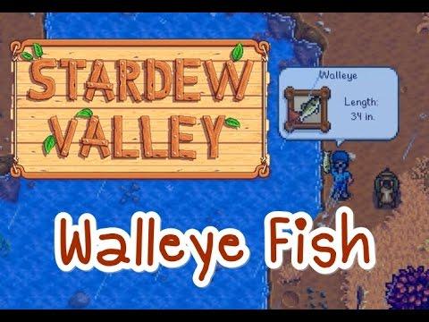 Walleye Fish (2 Locations) : Stardew Valley ในวันฝนพรำ