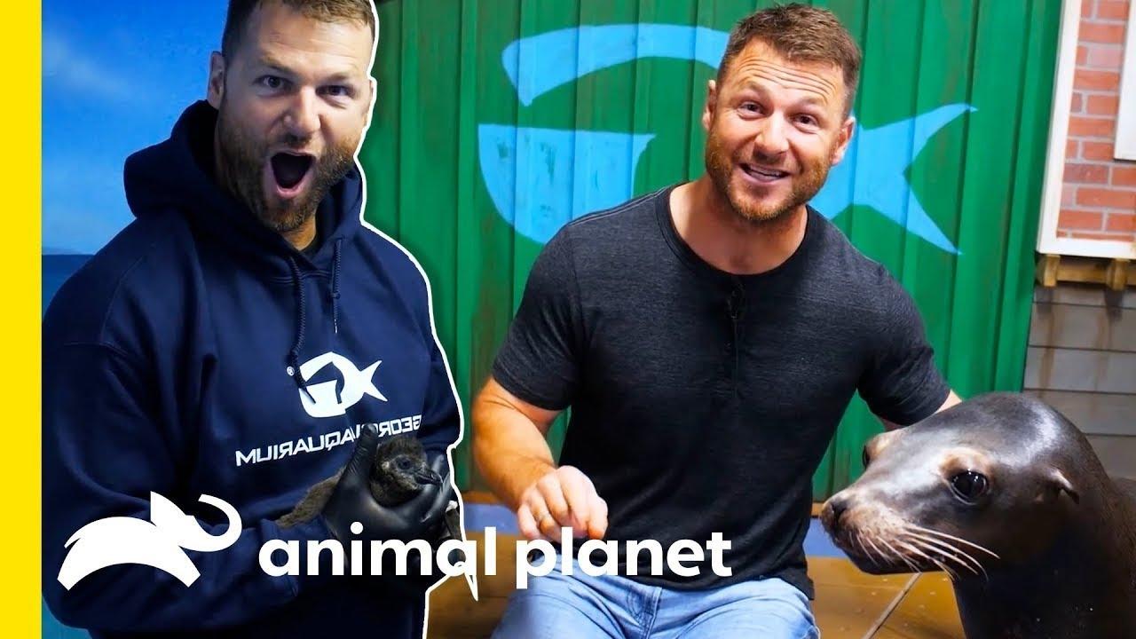 🔴 Dave Salmoni's Best Animal Lessons   Animal Bites with Dave Salmoni