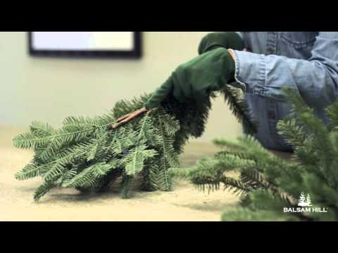 How to Fix an Improperly Shaped Branch from Balsam Hill™