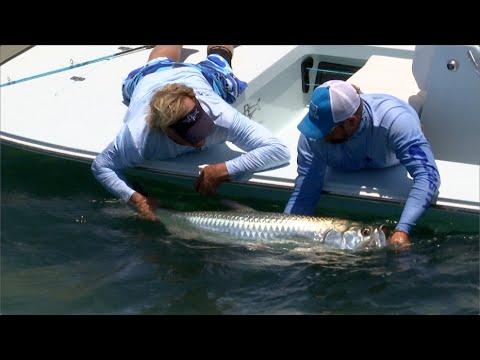 Tarpon Fly Fishing Key West in Beavertail Vengeance