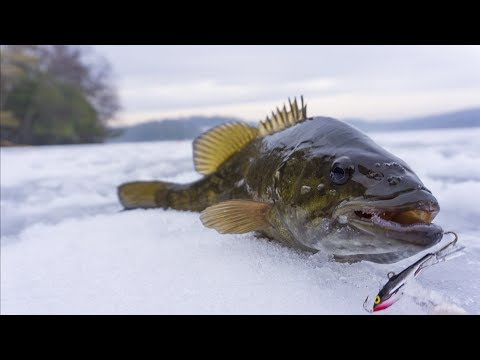 Northeast Smallmouth Bass Ice Fishing
