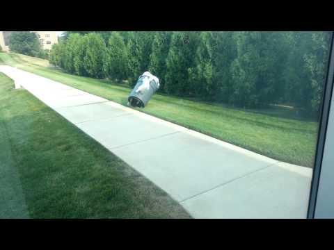 Skunk in trash can.