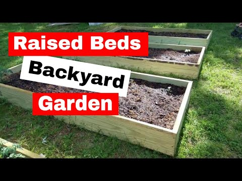 Raised Beds Backyard Garden: Update and Growth 14 days After Planting
