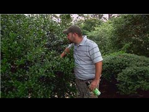 Pest Control : How to Keep Bees Out of Shrubs