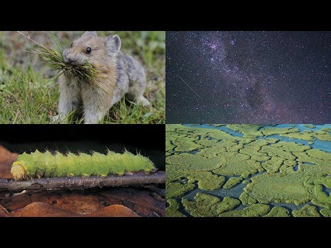 Cannibalistic Caterpillars, Bats Bonking into Windows, and More: 60 Second Science Podcasts