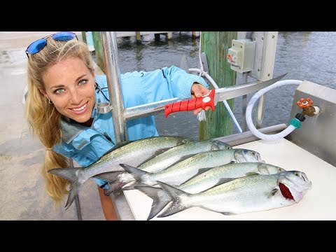 Florida Inshore Fishing CATCH, CLEAN & COOK Bluefish!