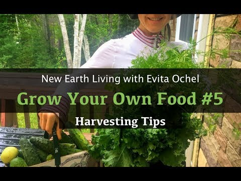 Grow Your Own Food 5 — Harvesting Tips (NEL ep. 17)