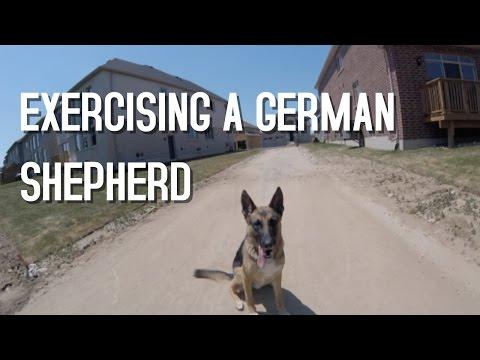 Exercising a German Shepherd