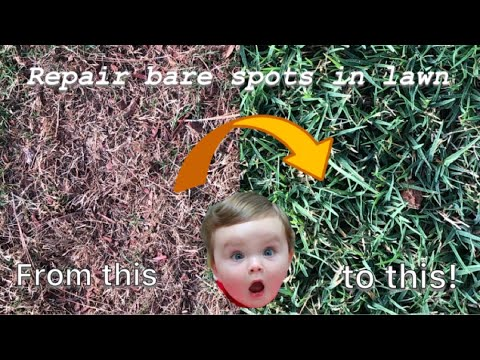 Repair bare spots in lawn forever