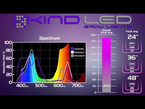 KIND LED vs. HPS, Black Dog, Lumigrow, Lush Light, California Light Works